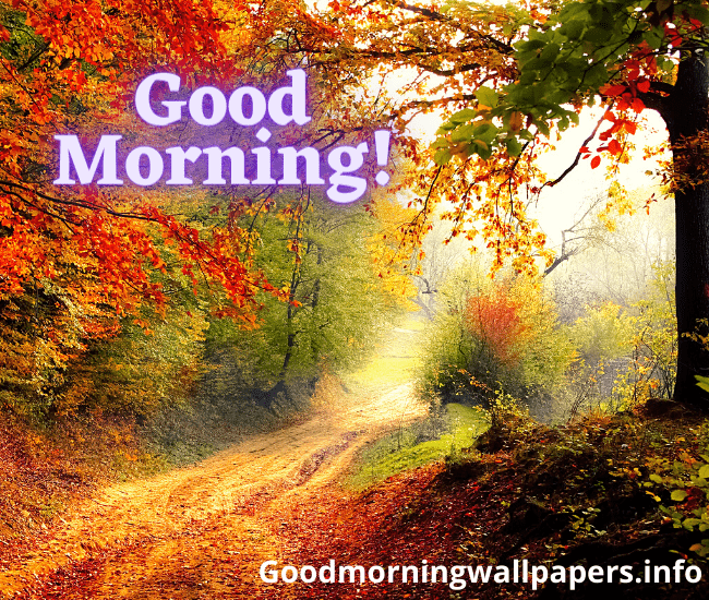 Beautiful Good Morning Scenery Images Download