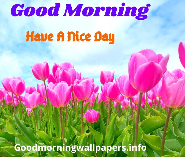 Flower Good Morning Images Wallpaper Pics
