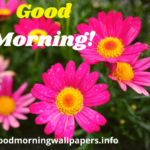 199+ Good Morning Flower Images Wallpapers {HD Pictures for Whatsapp}