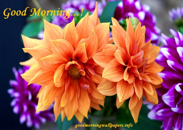 Good Morning Cute Flower Images