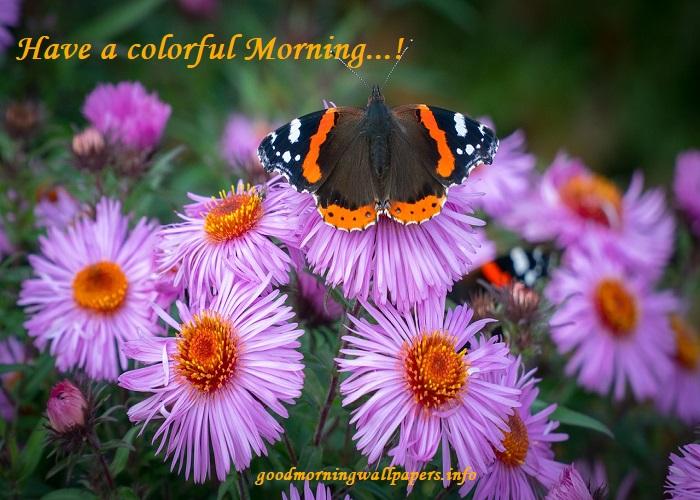Good Morning Flower Garden Images