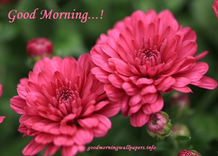 Good Morning Flower Images For Facebook
