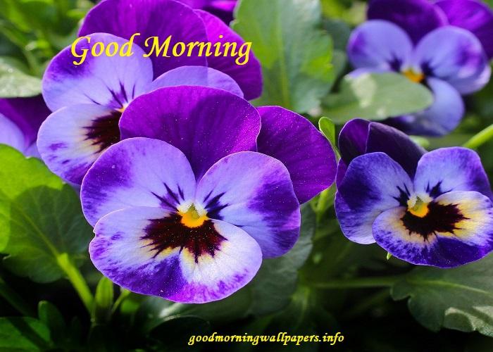 Good Morning Flower Images New
