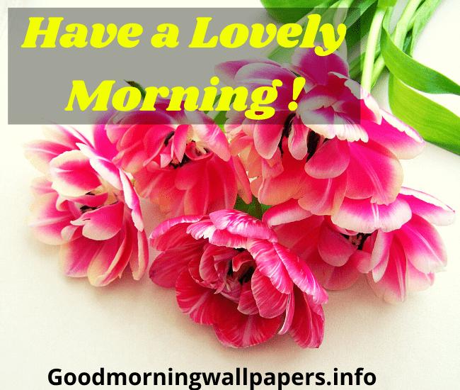 Good Morning Flower Wallpaper HD Download
