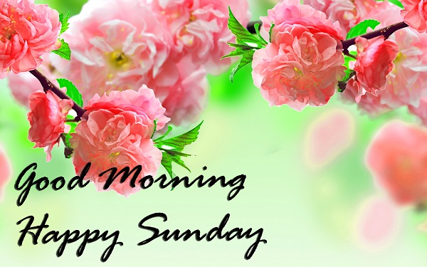 Good Morning Happy Sunday Wallpaper