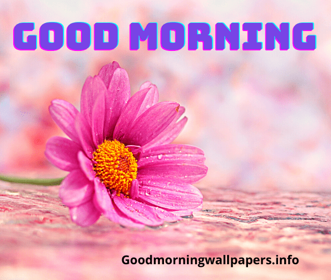 Good Morning Images with Single Pink Flower