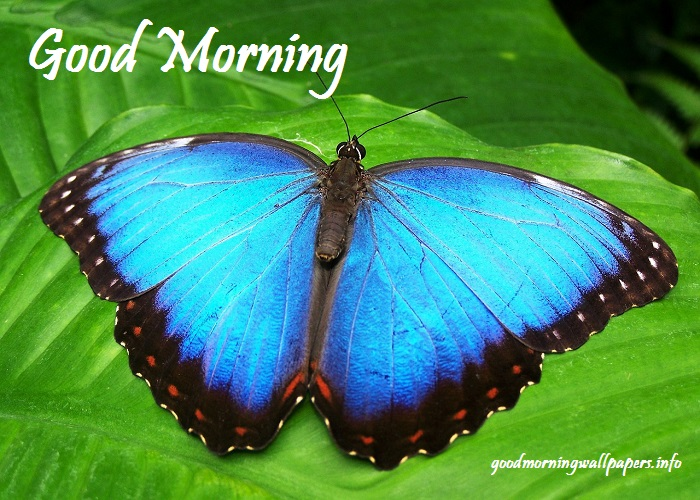 Good Morning Picture Free Download
