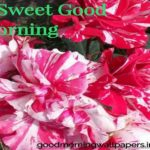 Good Morning Flower Images {Red, Yellow, Orange, Pink, Blue Flowers HD Pictures}