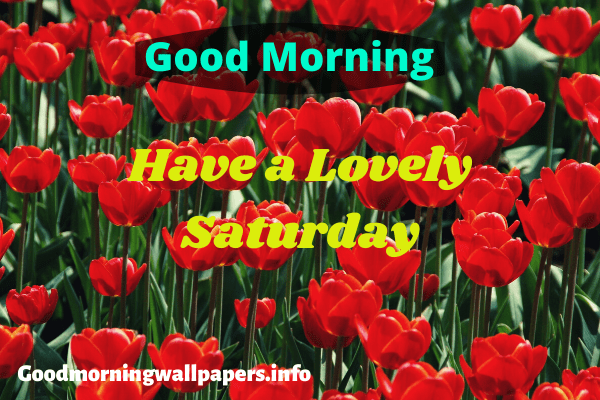 Good Morning Saturday HD Wallpaper
