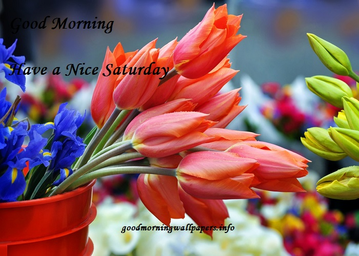 Good Morning Saturday Images HD
