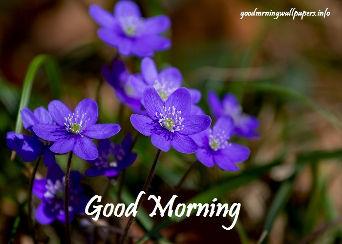 Good Morning Wallpapers Downloads