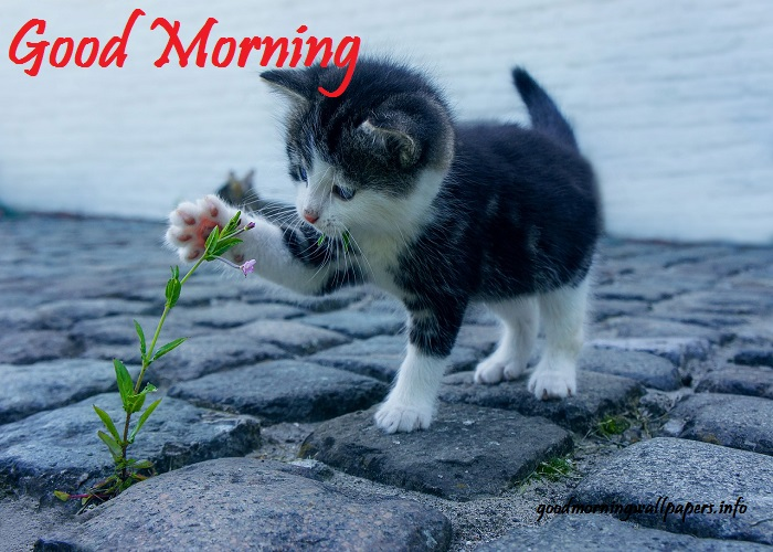 Good Morning Images Pictures Wishes Photos Hd 2020 Latest Image Collection