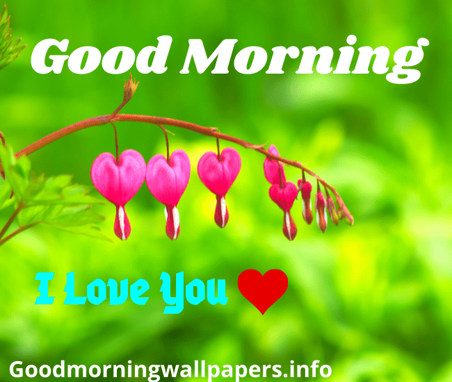 Pink Heart Flower Good Morning Wishes Images