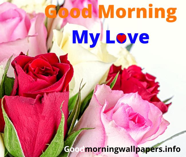 Red Rose Flower Good Morning Images