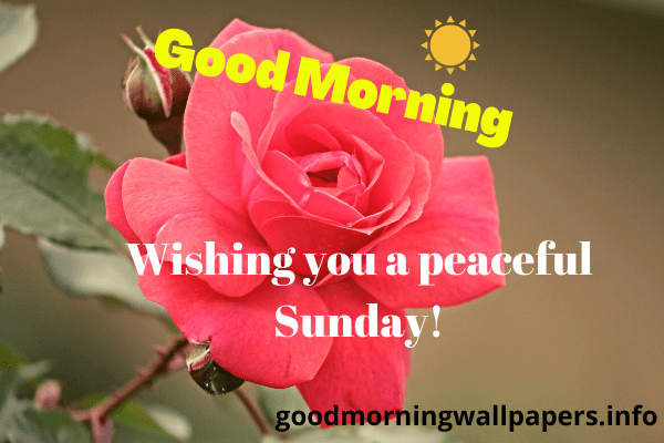 Sunday Good Morning Wishes for Friends