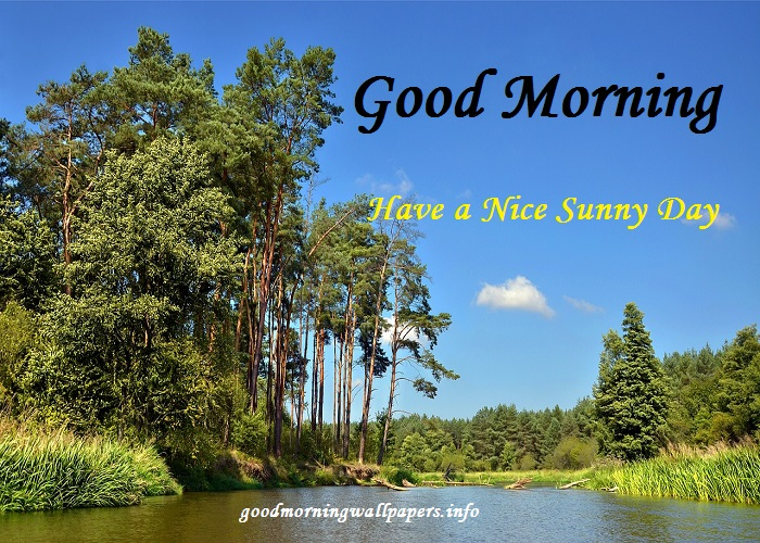 Good Morning Tree Images