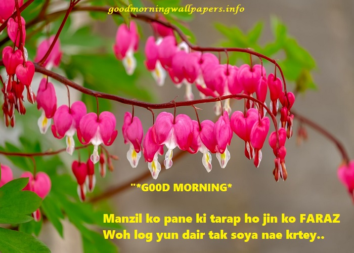 Good Morning Quote in Urdu with Picture