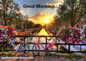 Good Morning Winter Flowers