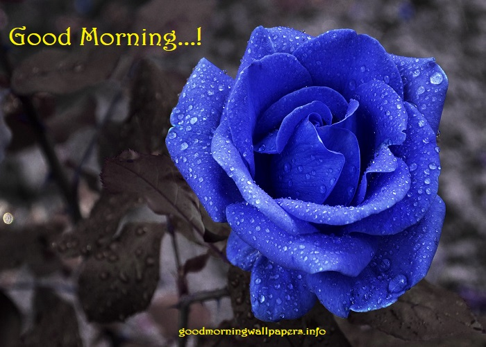 Blue Flower Rose