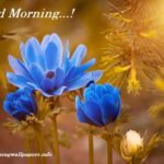 Blue Flower Good Morning Images {Best Collection 2020}