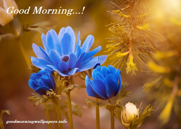 Good Morning Blue Flowers