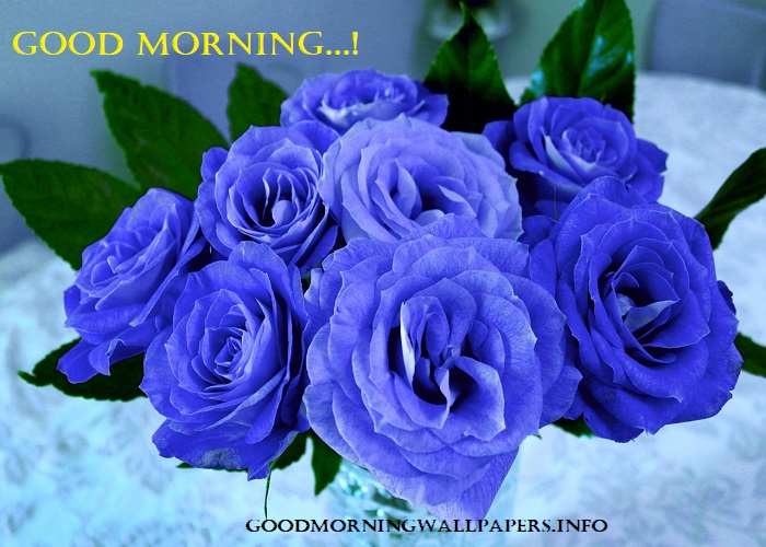 Good Morning Images With Blue Rose Flowers