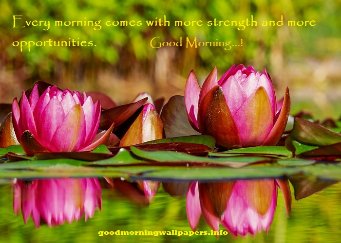 Good Morning Images With Nature Quotes Good Morning Nature Message