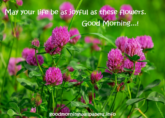 Flower Good Morning Nature Images With Message Beautiful Morning Nature Pictures