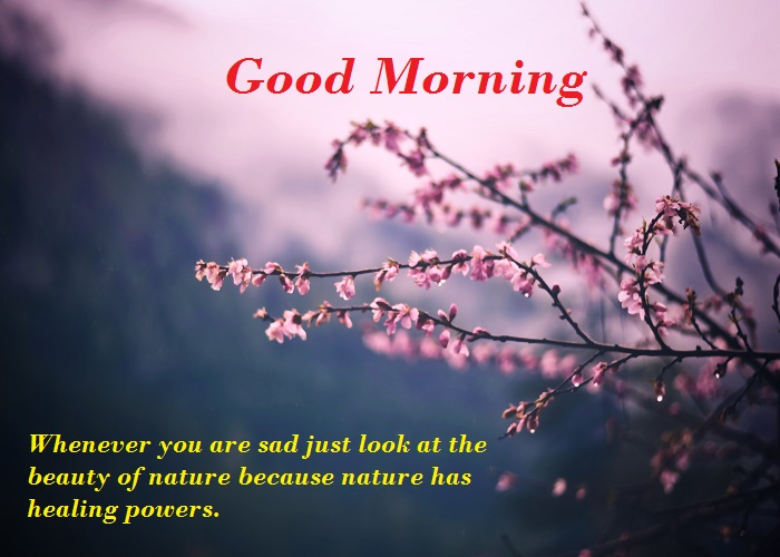 Good Morning Nature Images With Quotes HD Free Download