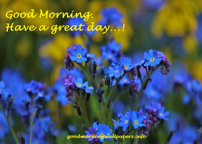 Good Morning Quotes With Blue Roses