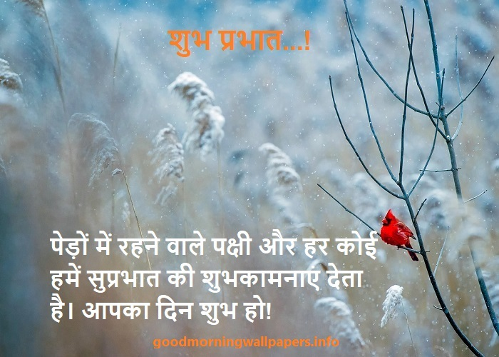 Good Morning Shyari in Hindi