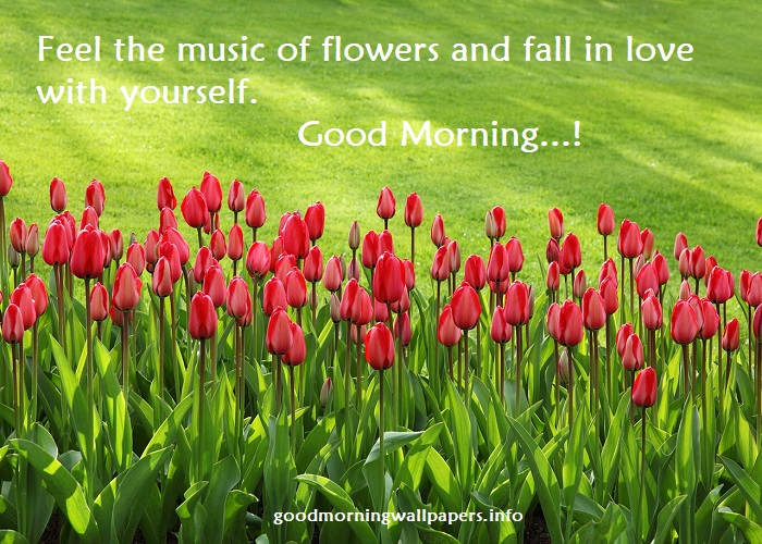 Lovely Good Morning Images With Nature