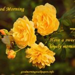80 Good Morning Wishes with Yellow Roses