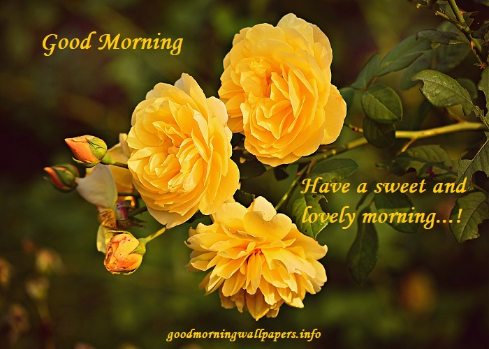Good Morning Wishes With Yellow Roses good morning yellow flower picture hd