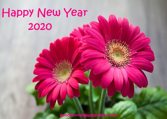 New Year Free Images 2020