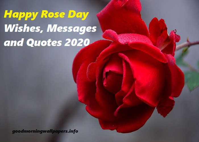 Happy Rose Day 2020 Messages Wishes And Quotes
