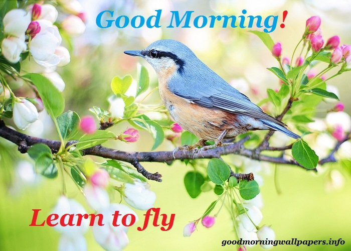 Beautiful Good Morning Birds