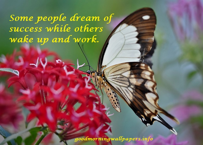 Beautiful Good Morning Butterfly Images