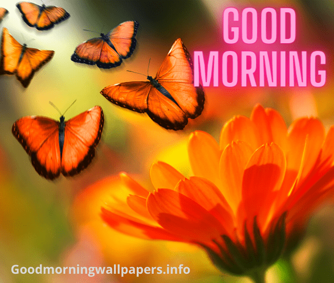 Butterfly Good Morning Images pics photo download for whatsapp