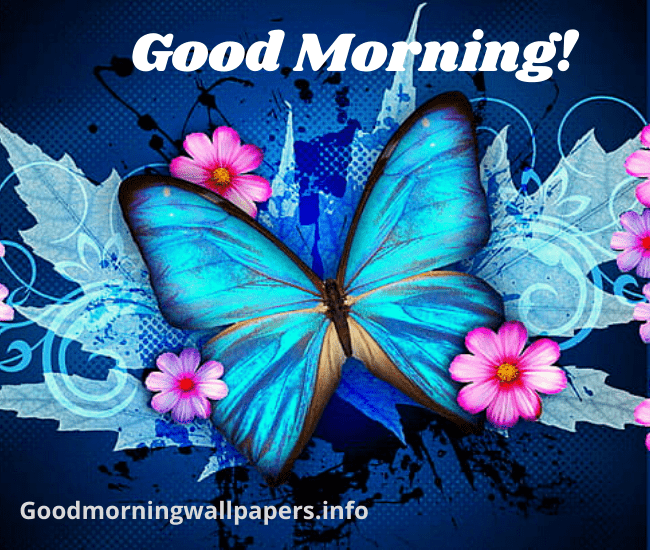 Butterfly Good Morning Images wallpaper pictures photo hd download