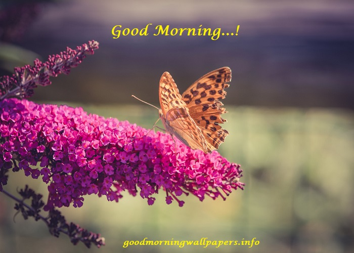 Cute Good Morning Butterfly