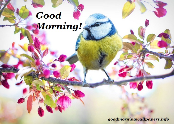 Good Morning Bird Wallpaper
