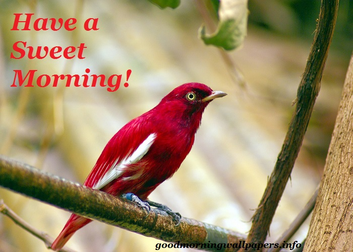 Good Morning Birds Images HD
