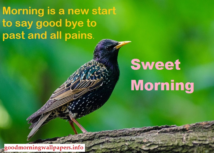 Good Morning Birds Quotes