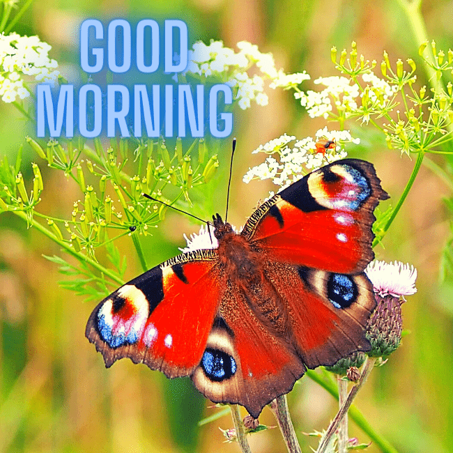 Good Morning Butterfly Images with Pink Flowers