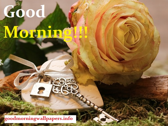 Good Morning Heart Flower Images