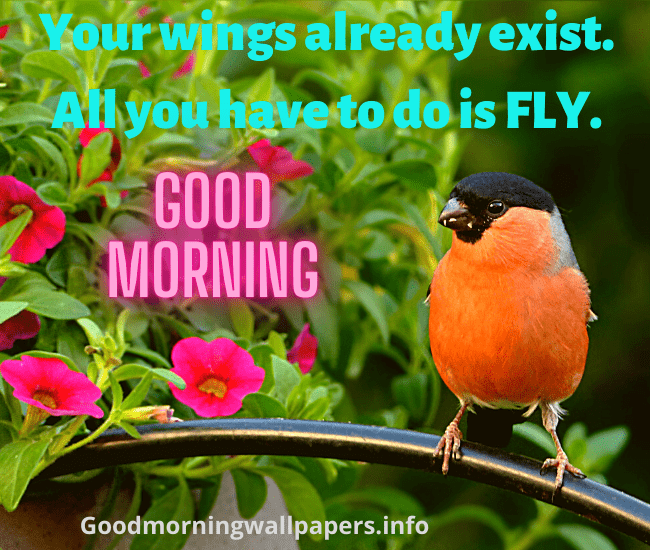 Good Morning Wishes with Birds
