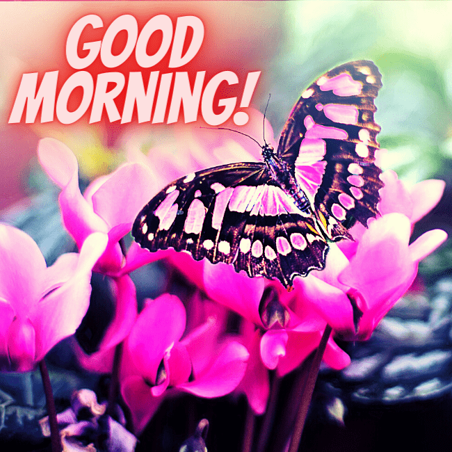 Good Morning Wishes with Butterfly Images