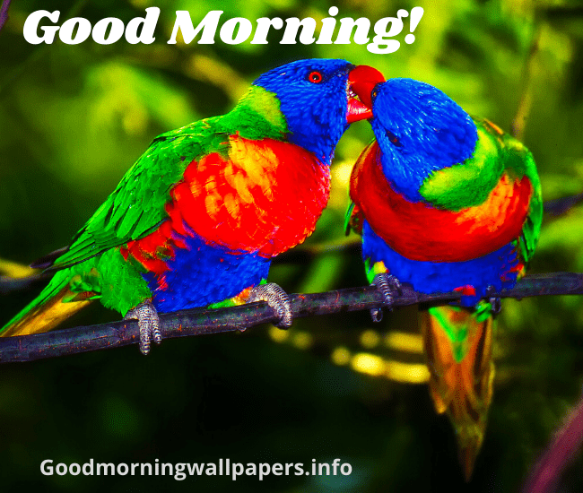 Good Morning Wishes with Love Birds