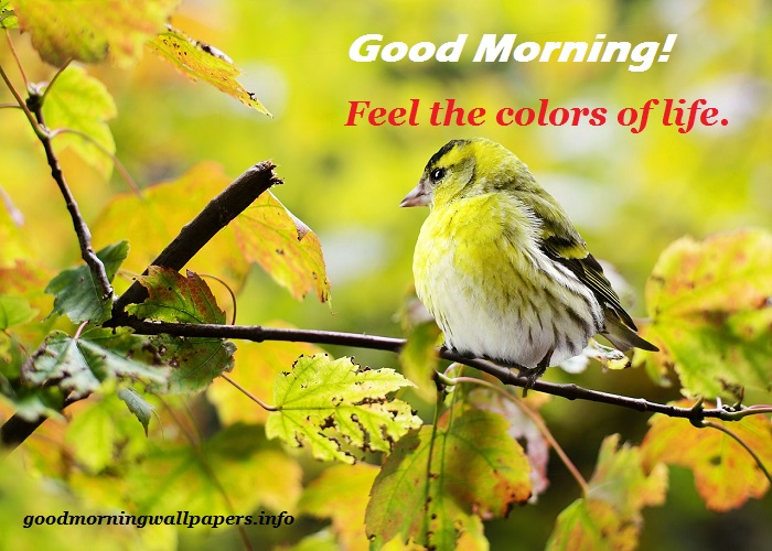Have A Nice Day Good Morning Birds